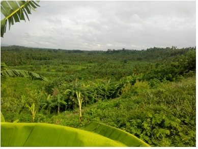2383 Sqm Farmland in Paradise Valley Subd. Calauan, Laguna For Sale