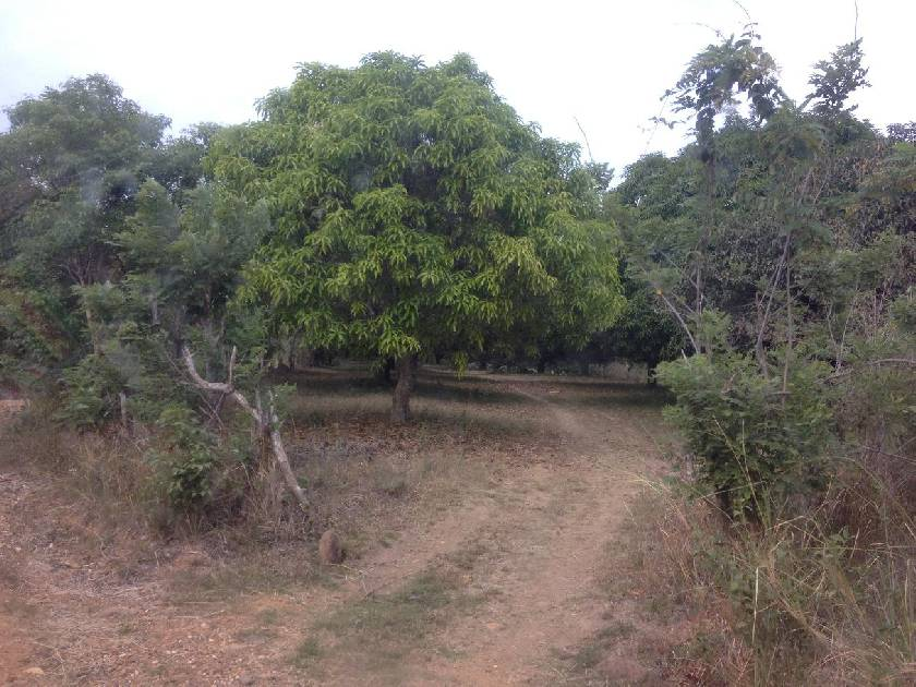 8.4 Hectare Farmland in Pulo San Rafael, Bulacan For Sale