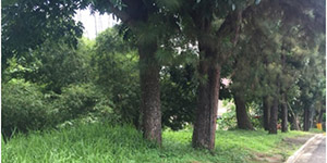 Vacant Lot in Canyon Woods Residential Resort Talisay City, Batangas For Sale - 343 Sqm
